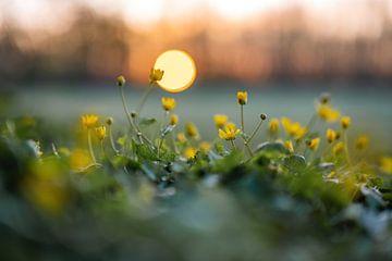 Blumen Teil 106 von Tania Perneel