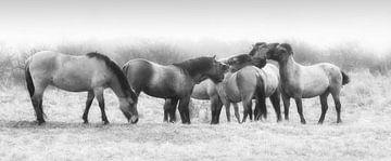Konik-Pferde von Karel Ton