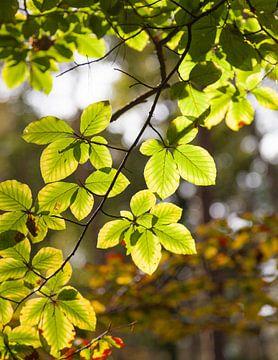 Prachtige bladeren van Nel Diepstraten