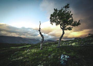 Trees to die van Jip van Bodegom