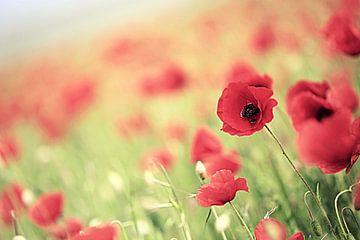 poppies ... von Els Fonteine