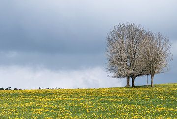 Blütezeit von Hetwie van der Putten
