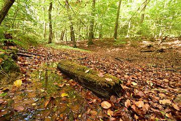 Wald im Herbst von Philipp Klassen