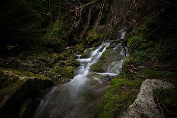 Spooky Forest sur Wim Slootweg