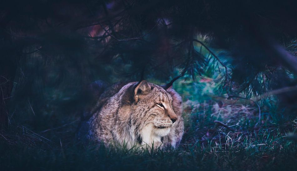 Lynx cat van Mark Zanderink