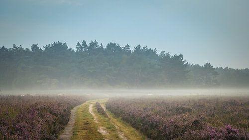 Karavaan heideschapen in de mist