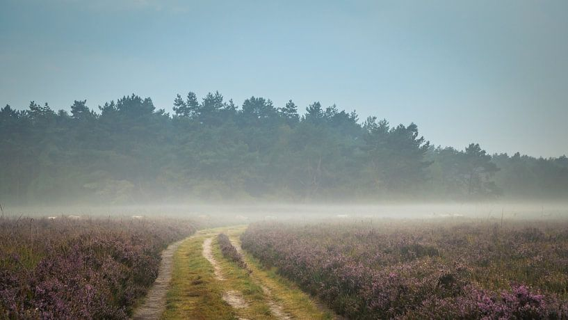 Karawane Heide-Schafe im Nebel von Gerrit Veldman