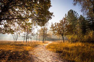 Mistige zonsopkomst von Jeffrey Van Zandbeek