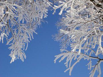 Sneeuw  de bomen von Froukje Hobma
