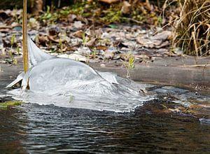 Dolfijn van bevroren water van