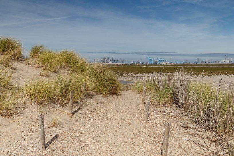 dunes hollandaises sur Menno Schaefer