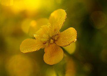 Gelb im Sumpf von Peter Heins