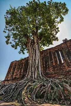 Alter Baum von Karen Klein
