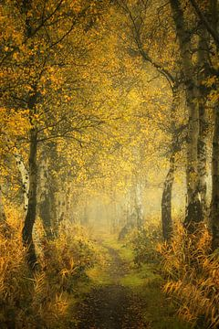 Mystérieuse forêt de Mastforest Breda Holland sur Saskia Dingemans