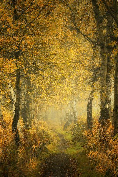Mysterious Mastforest Breda Holland van Saskia Dingemans