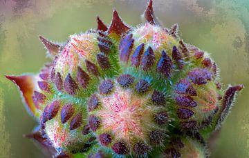 Piepklein bloemetje sedum van Rietje Bulthuis