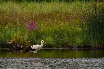 Ooievaar in rivier de Mark, Breda van Henny van Riel