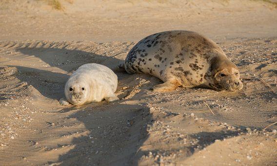 zeehondmoeder met pup
