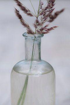 Die Einfachheit von Gras in einer Flasche von Affect Fotografie