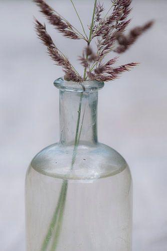 De eenvoud van gras in een flesje