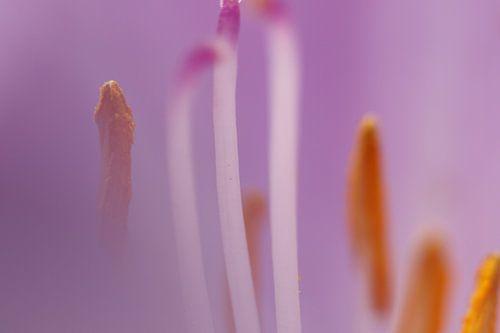 Macro opname meeldraden bloem