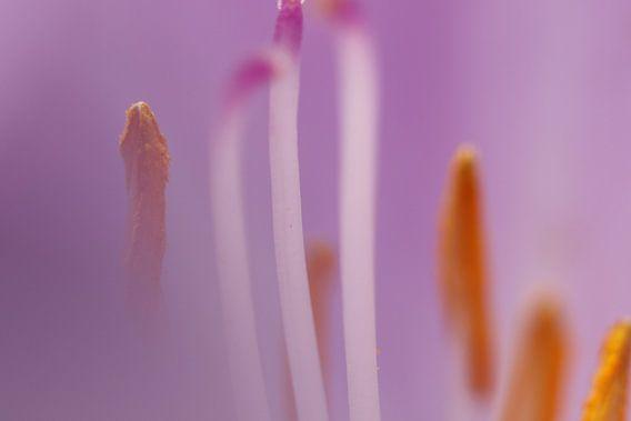 Macro opname meeldraden bloem van Geert Naessens