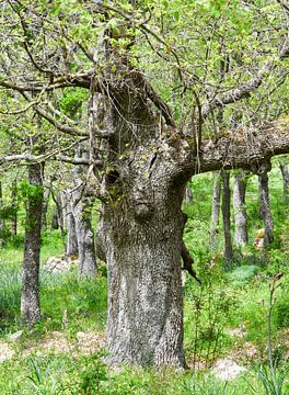 'Hert in het bos' van Erna Kampman