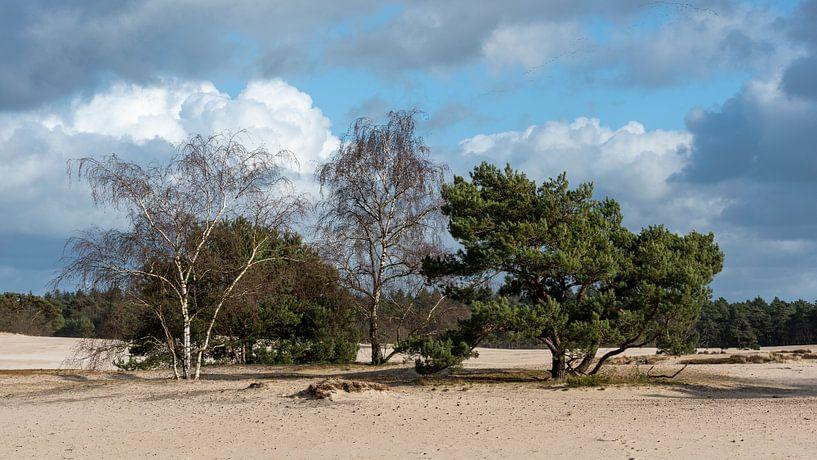 Bäume auf langen Dünen von Rob IJsselstein