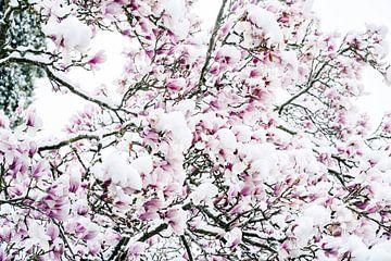 Magnolie im Schnee von Huib Vintges