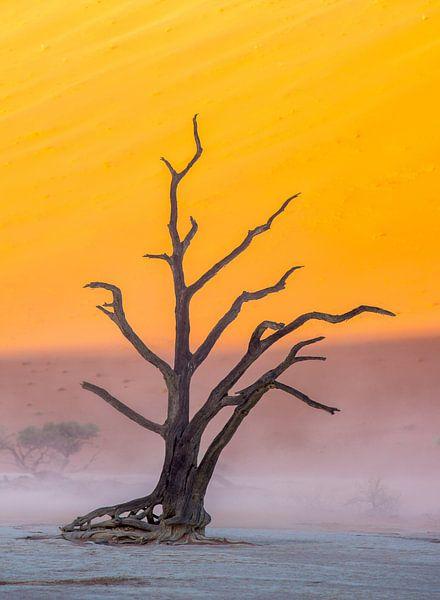 Deadvlei sandstorm van Steven Driesen