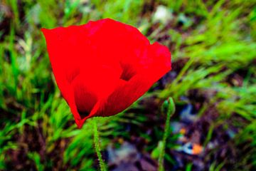 Rode bloem van Jane Changart