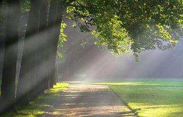 Licht in de ochtend van Bernhard Kaiser