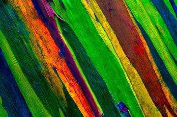 Baummalerei von Colors of the Jungle