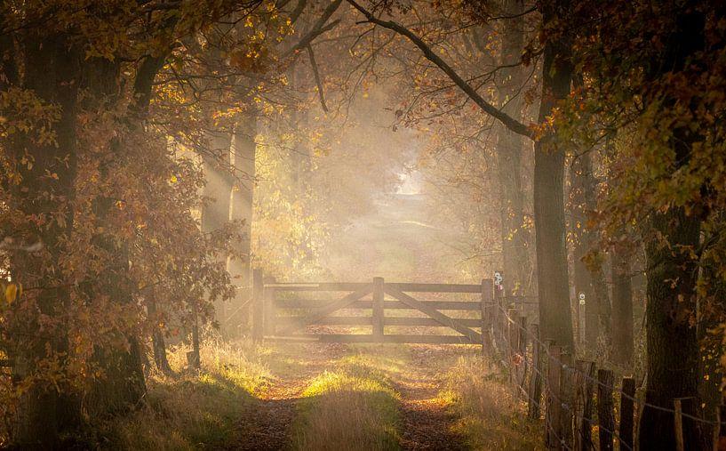 Poortje naar het licht in de Laurabossen van Peschen Photography