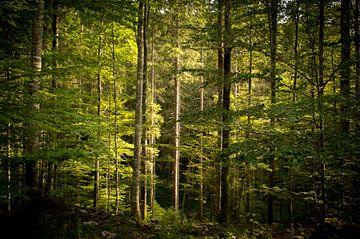 Mysteriöser Wald in Slowenien von Reis Genie