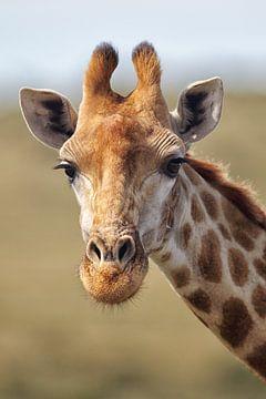 Giraffe van Dirk Rüter