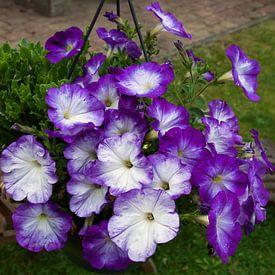 Paarse bloemen in de zomer. van Ina Hölzel
