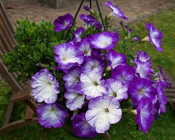 Paarse bloemen in de zomer. sur Ina Hölzel