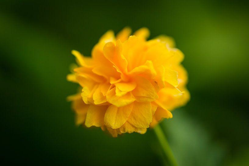 Tiny Yellow Flower van William Mevissen