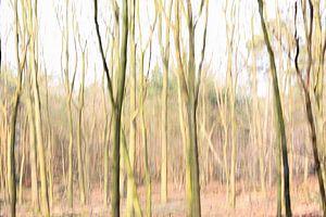 Vertical blur techniek van de bomen in de Rucphense Hei van