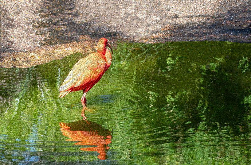 Flamingo von Anjo ten Kate
