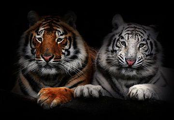 Tigers von Bert Hooijer