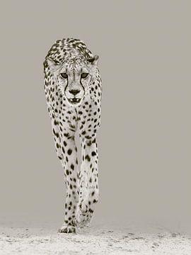 Der starke Gepard von Sharing Wildlife