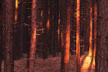 Schaduwspel in het Hoornse Bos.