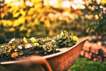 Blumenbeet von Foto Oger