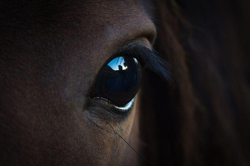Eye van Vincent Tollenaar