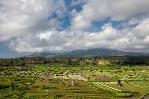 Bali, Indonesië. Rijstvelden, kokospalmen en hutten op de achtergrond