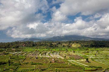 Bali, Indonesien. Reisfelder, Kokospalmen und Hütten im Hintergrund von Tjeerd Kruse