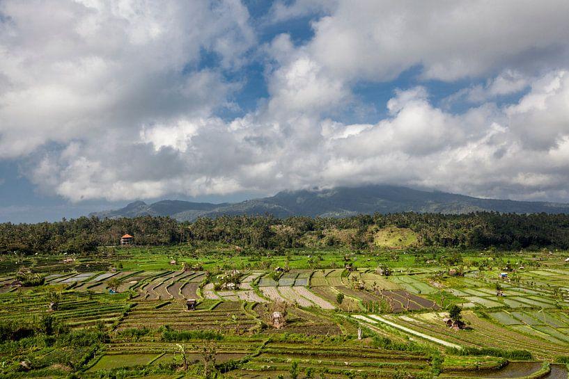 Bali, Indonesië. Rijstvelden, kokospalmen en hutten op de achtergrond van Tjeerd Kruse
