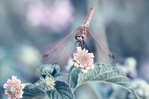 Libelle  von Violetta Honkisz